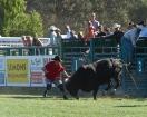 Rodeo Fun